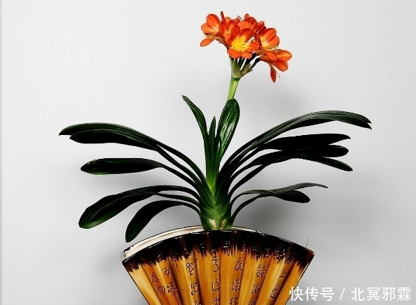 蓝妖:夏天别再乱浇水了,这6种花,越浇水越死!