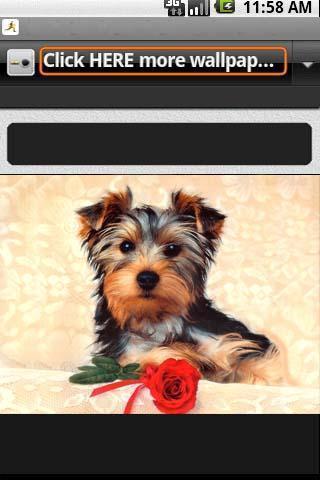 可爱的狗墙纸_360手机助手