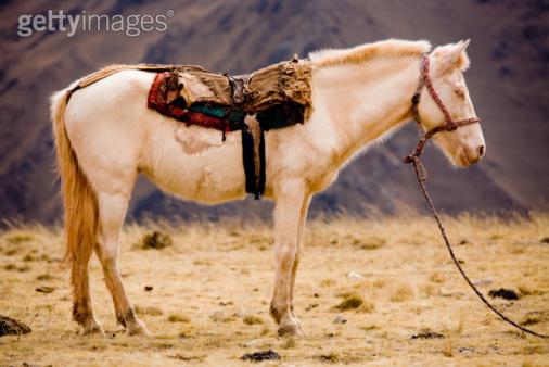 马是站着睡觉的.