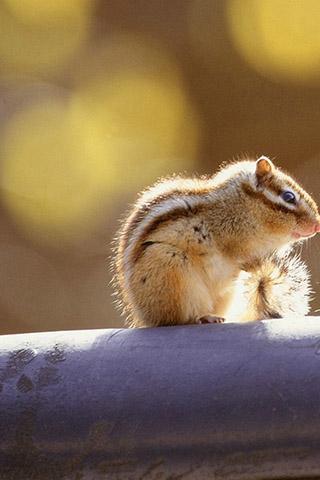 本科和与其亲缘关系接近的动物组成松鼠形亚目(sciuromorpha).