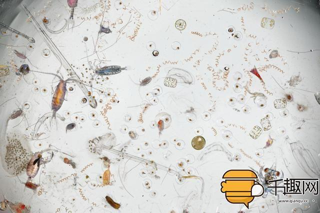 把海水中的成分放大25倍 看起来太恶心了 -  - 真光 的博客