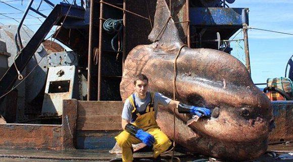 """捕获1吨重怪鱼发""""朋友圈"""" 渔民却惹祸上身"""