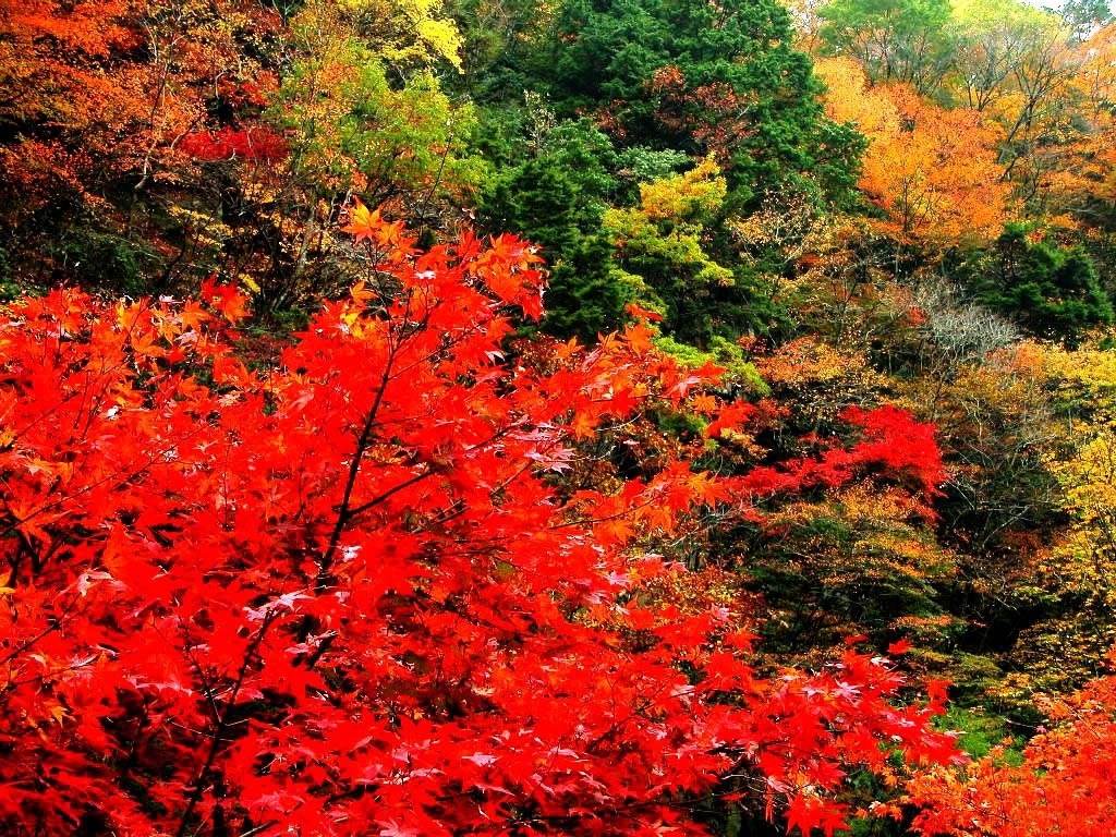 香山红叶节